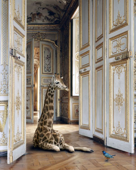 karen-knorr-francesco-catalano-2