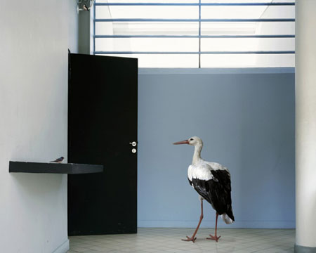 karen-knorr-francesco-catalano-7