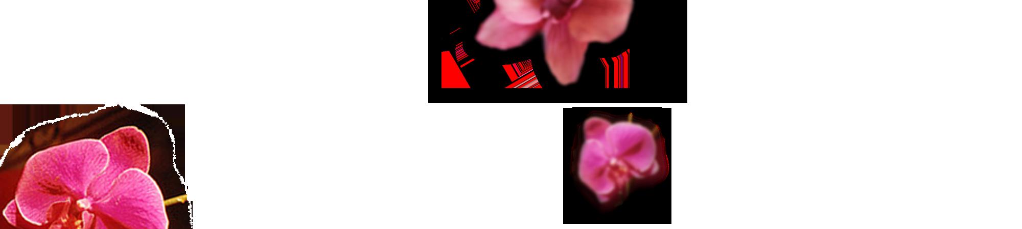 orchidee 2p