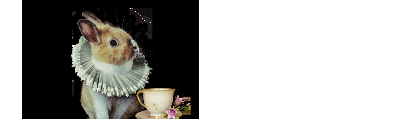 lapino-tazza